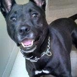 Gumbo, the dog.